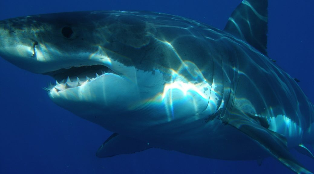 So you want to be published? Be careful -there are sharks. Storytellerchristine- multiplying disciples one story at a time